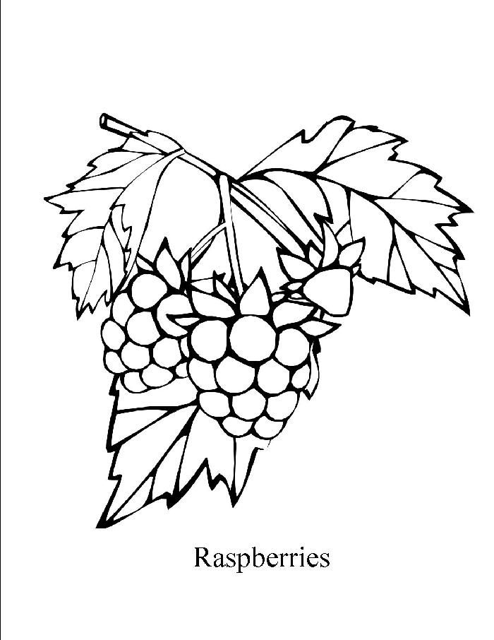 24 Free Raspberry Coloring Pages Online Coloring Pages