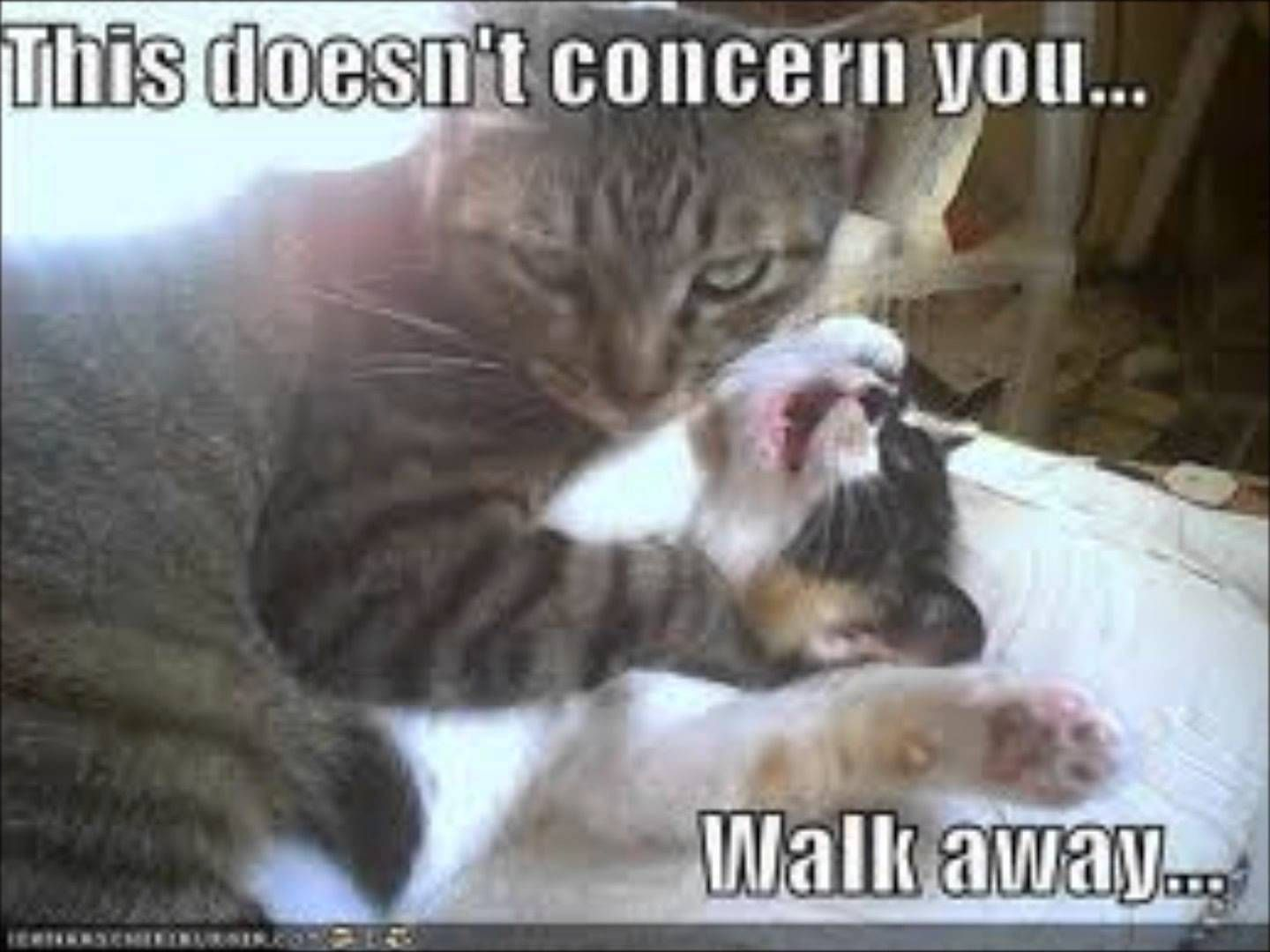 Funny Evil Kitten Memes Google Search With Images Funny Cat