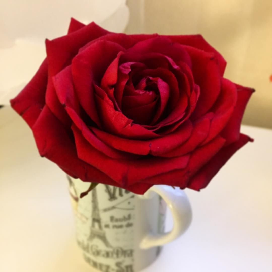 Thx my love rose redrose valentinesday love gift flower thx my love rose redrose valentinesday love gift flower negle