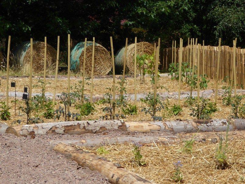 Les Vertus De La Paille Au Jardin Paillage Potager Paillage Jardin Jardins