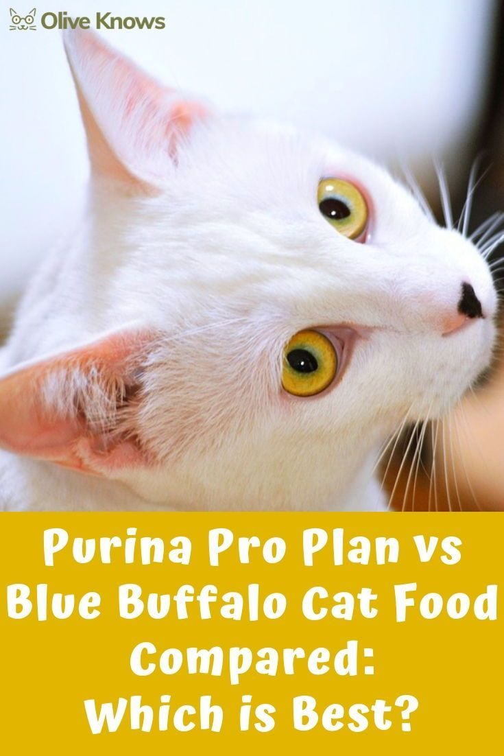 Purina Pro Plan Vs Blue Buffalo Cat Food Compared Which Is Best Cat Food