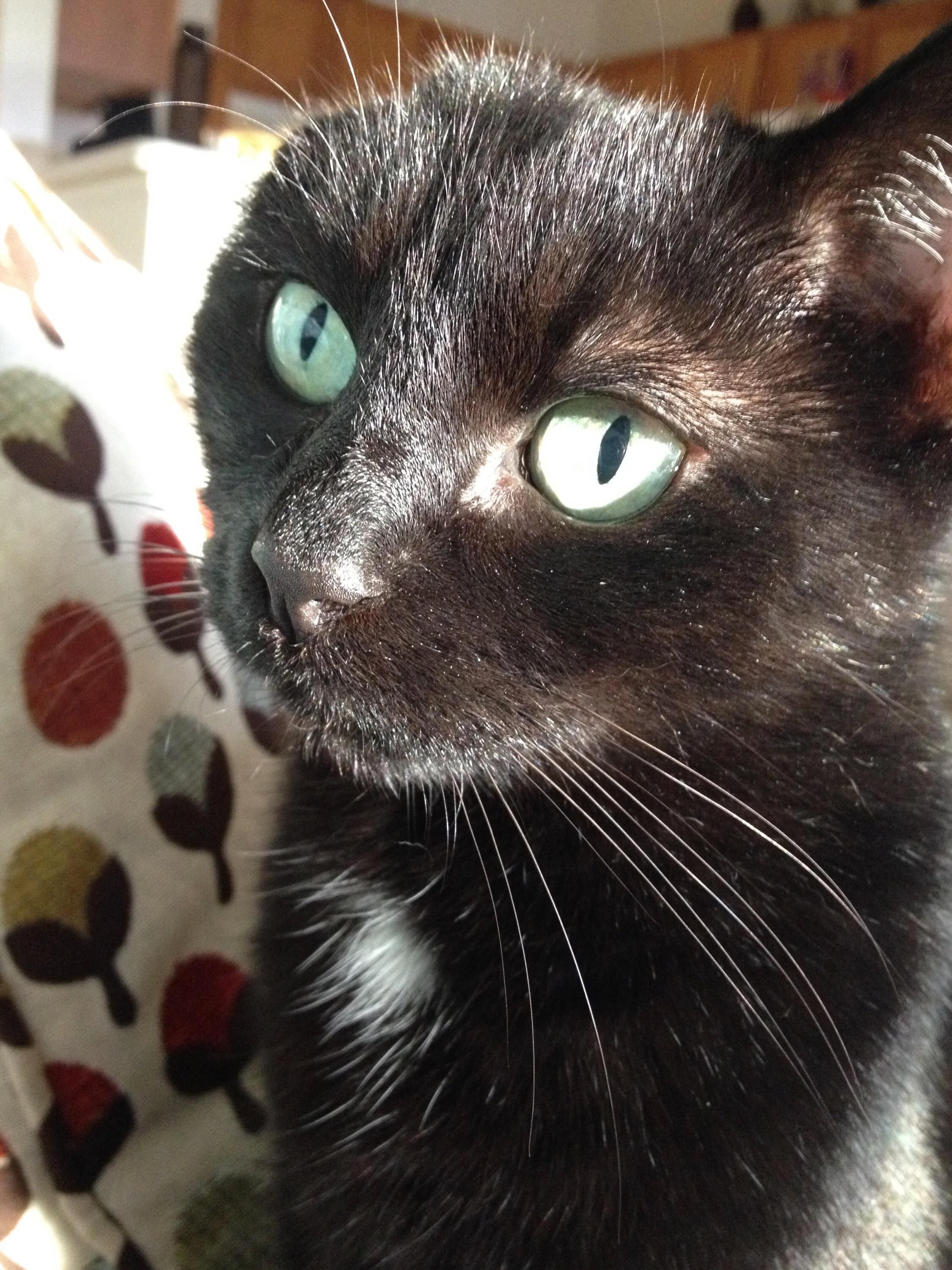 My 13 Year Old One Eared Lady Morgan Cute Cats And Kittens Crazy Cats Cute Baby Animals