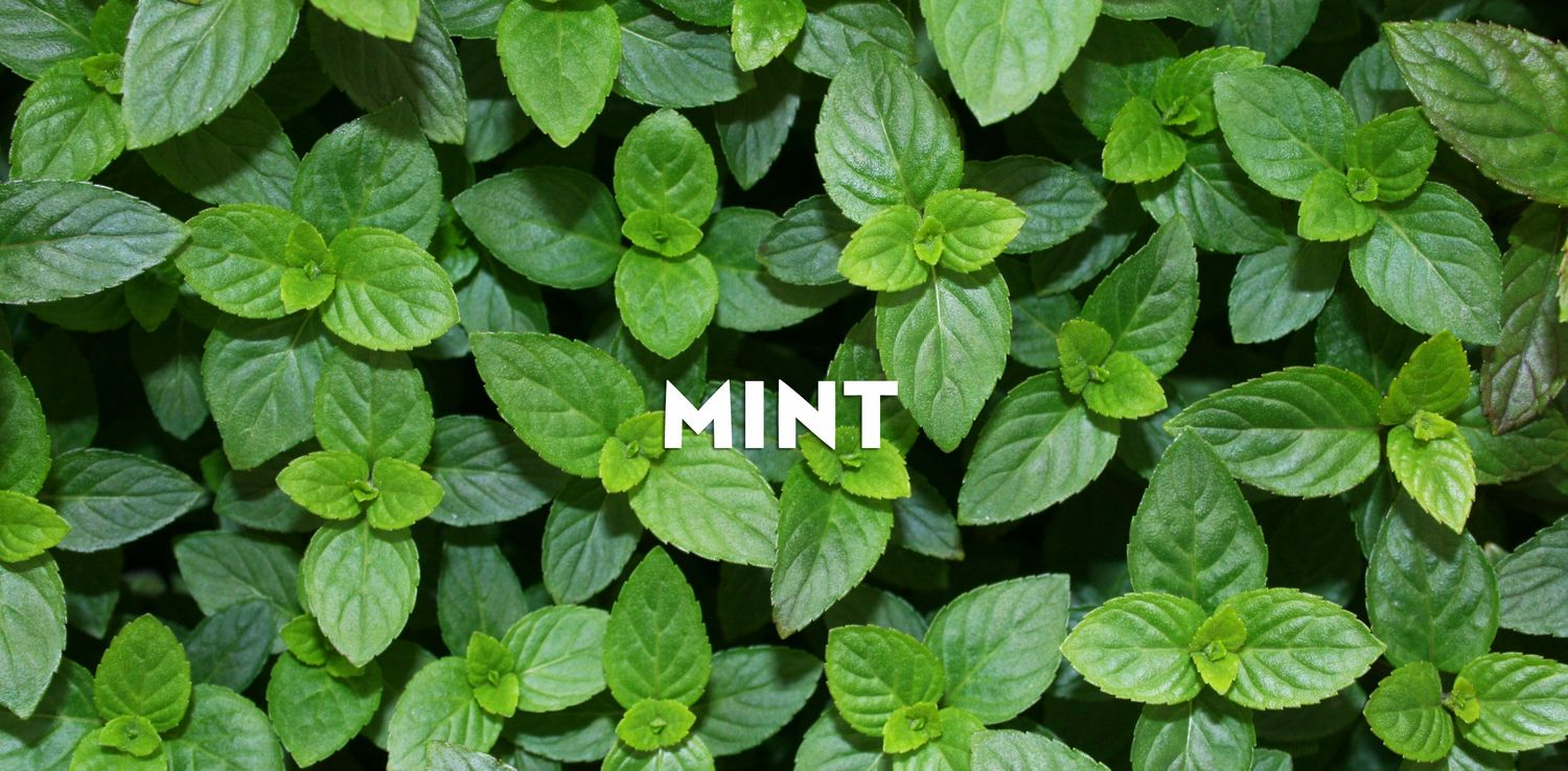 mint u2014 minto island growers melissa u0027s backyard pinterest