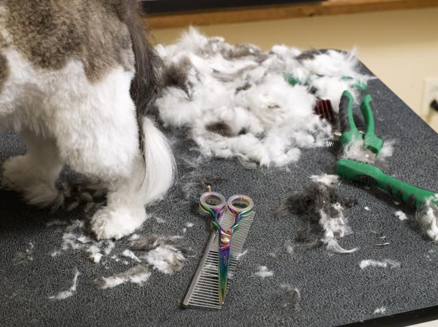 How To Start A Mobile Dog Grooming Salon Pet Styling Salon
