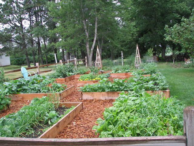 Cedar Chips Garden Paths Wood Chips Landscaping Garden Paths Glass Garden