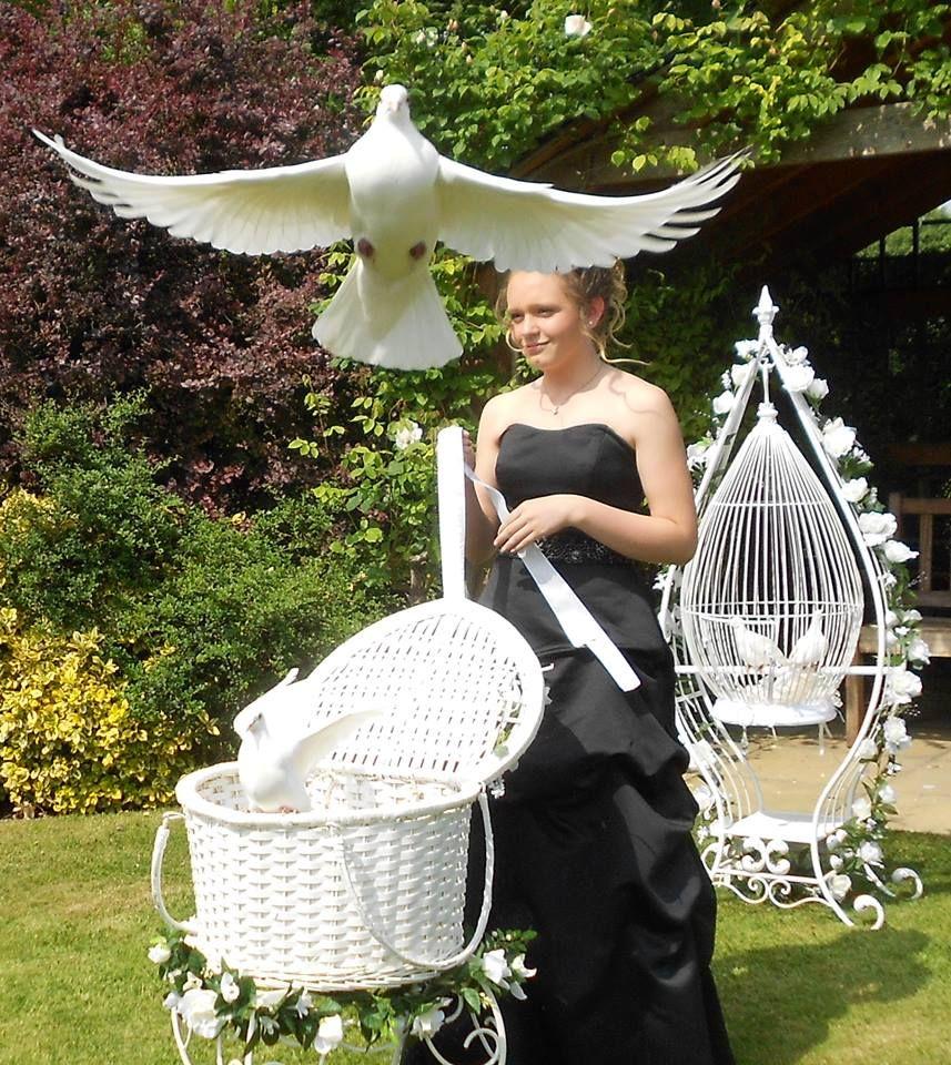Doves for weddings www.destinydoves.co.uk Wedding doves