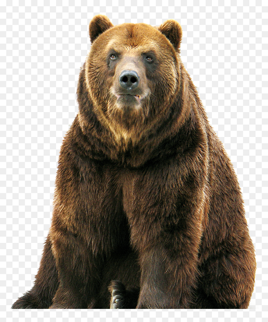 Brown Bear Hd Png Download Is Pure And Creative Png Image Uploaded By Designer To Search More Free Png Image On Vhv Rs Brown Bear Bear Teddy Bears Valentines