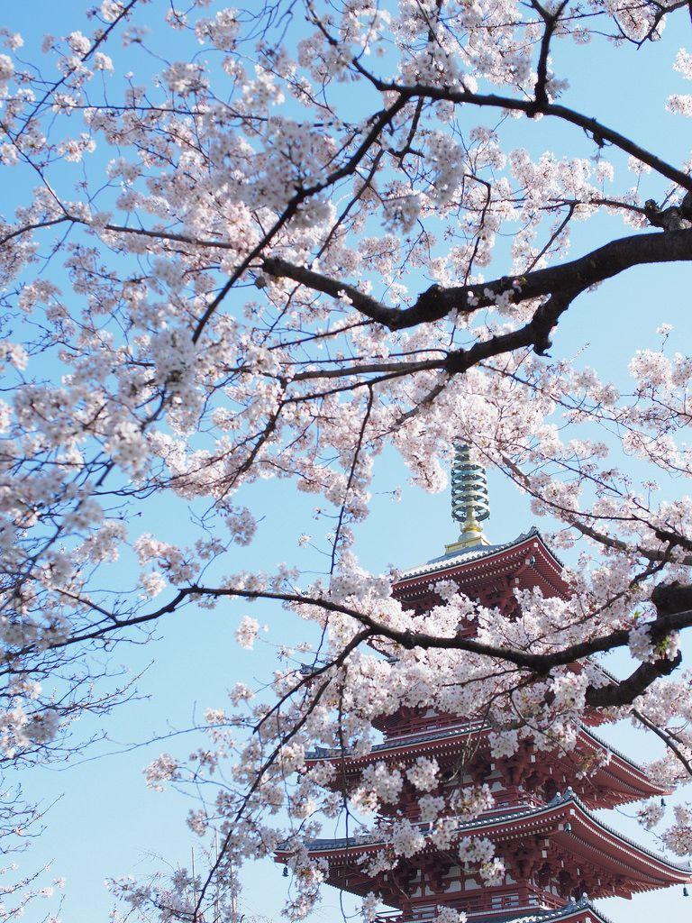 桜の御簾 -