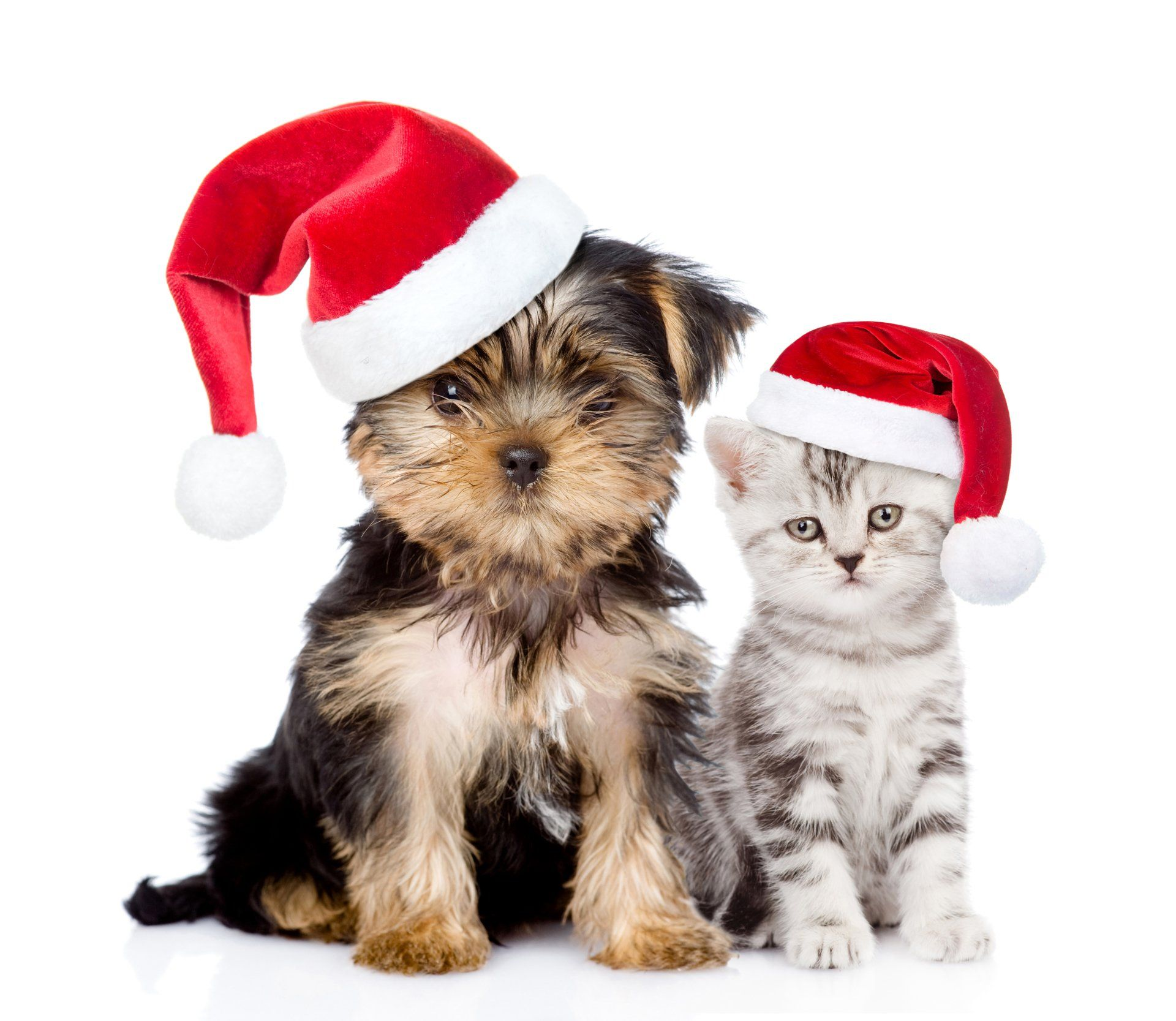 Animal Cat & Dog Holiday Christmas Puppy Kitten Santa Hat