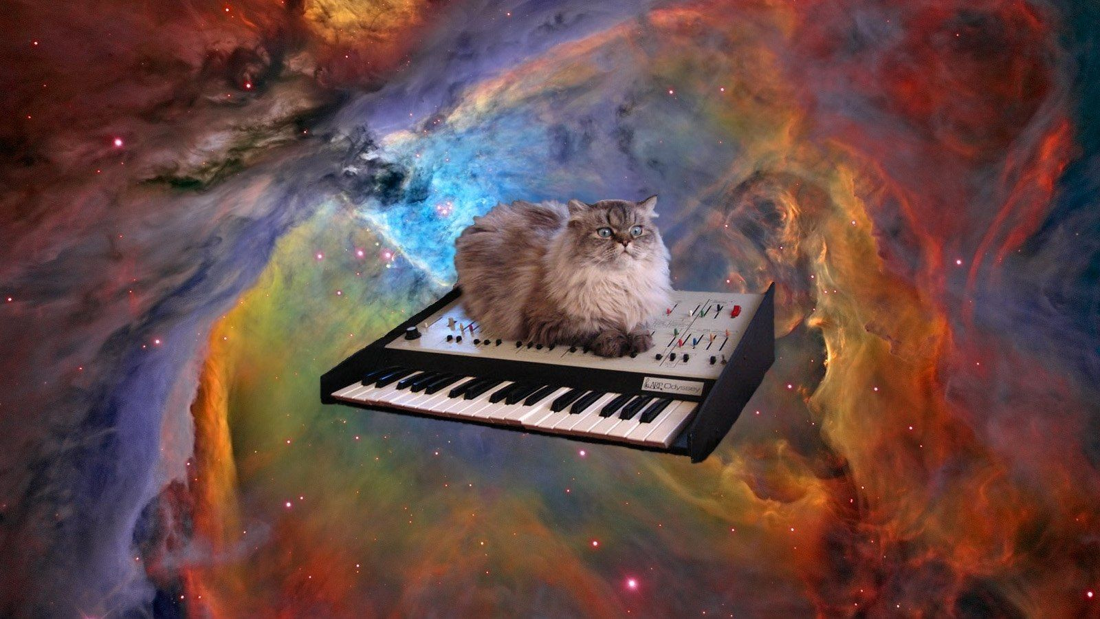 Wallpaper cats in space cat in space wallpaper 1600x900 - Space kitty wallpaper ...