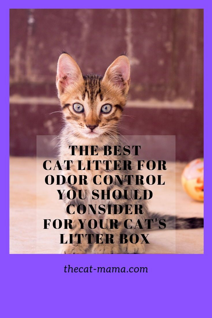 Finding the best top rated cat litter brands to buy for