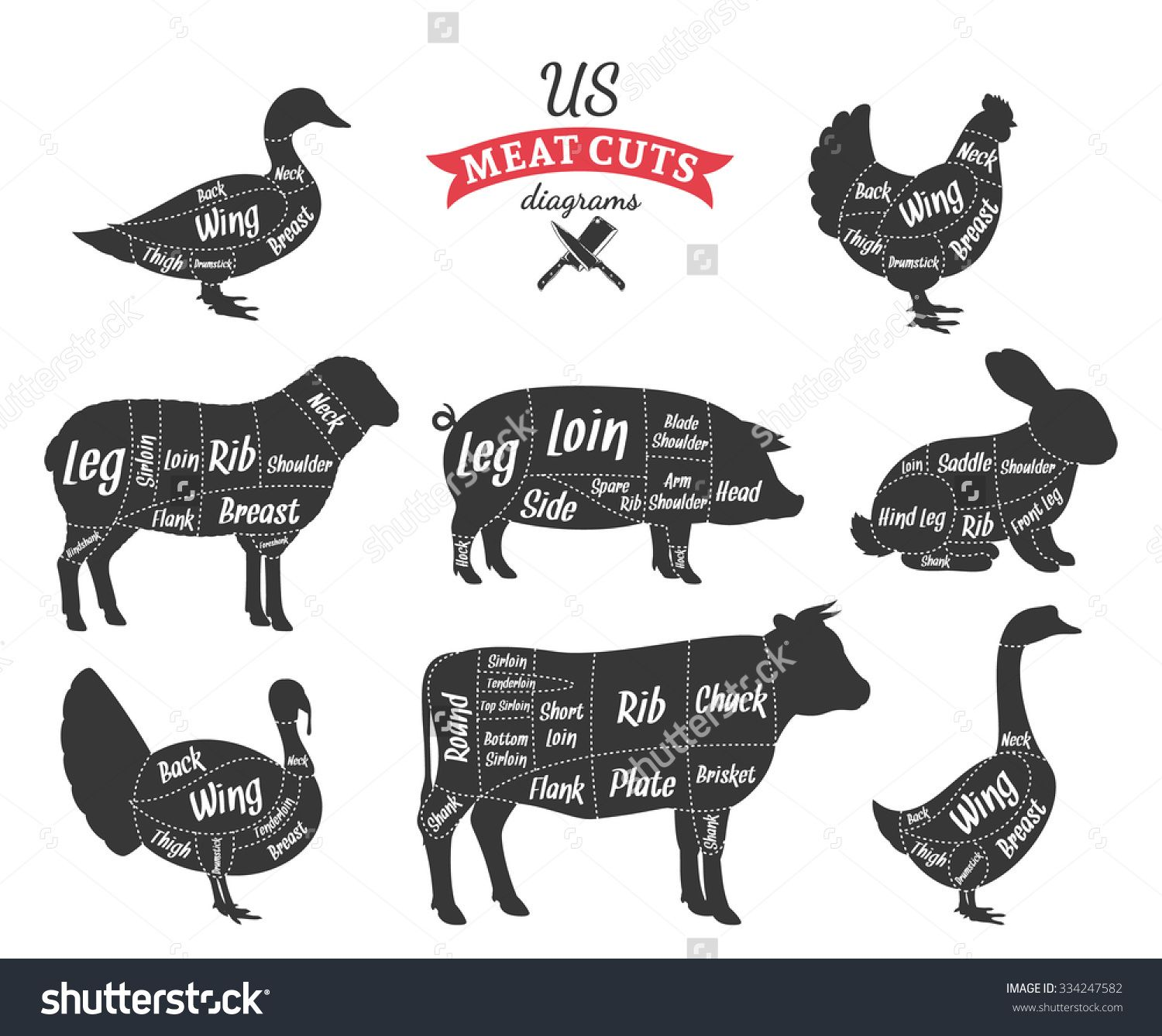 Stock vector american us cuts of beef pork lamb rabbit chicken american us meat cuts diagrams stock vector image 61345552 pooptronica