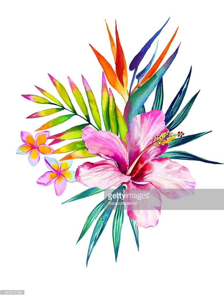 Illustration Bouquet De Fleurs Tropicales Dessin Bouquet De