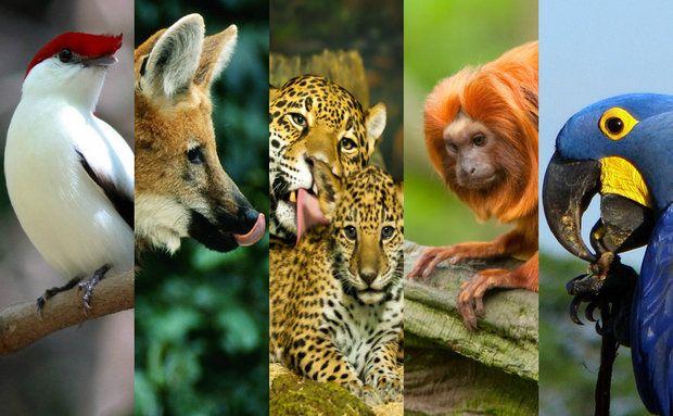 Animais Dos Biomas Do Brasil Animais Do Brasil Fotos De Animais