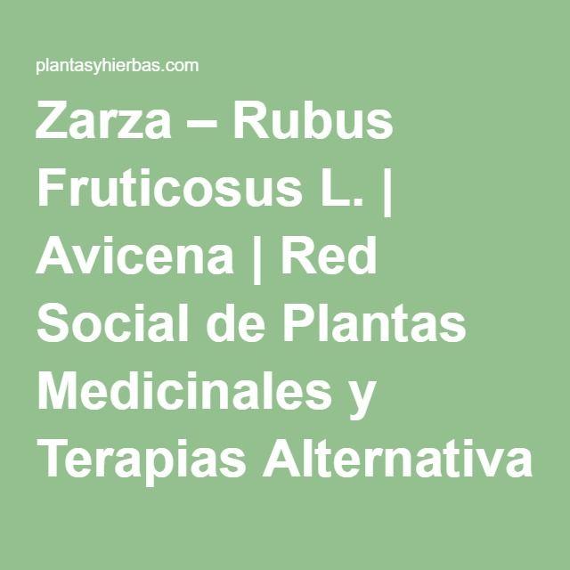 Zarza – Rubus Fruticosus L. | Avicena | Red Social de Plantas Medicinales y Terapias Alternativas