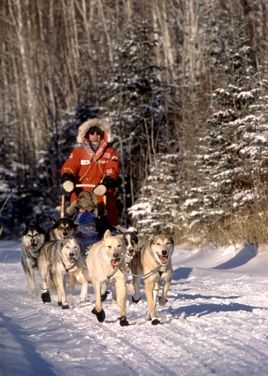 Sundogs Dogsled Excursions In The Boreal Forest Of Saskatchewan