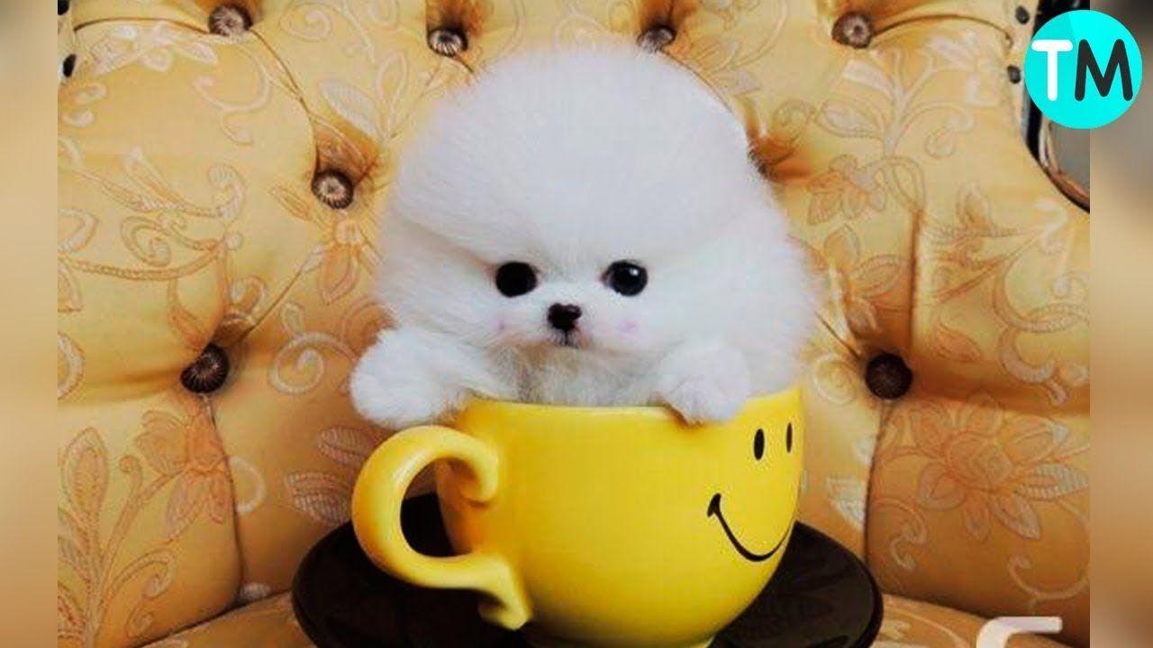 Las 10 Razas De Perros Más Pequeñas Del Mundo Perros Y Cachorros Lindos Perritos Minúsculos Perros Y Bebes