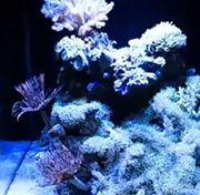 Photo of Aquarium LED Lights, Controllers, PWM; What is Best? aquariu…
