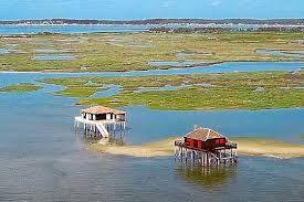 cabane tchanquées de l' île aux oiseaux au Bassin d'Arcachon