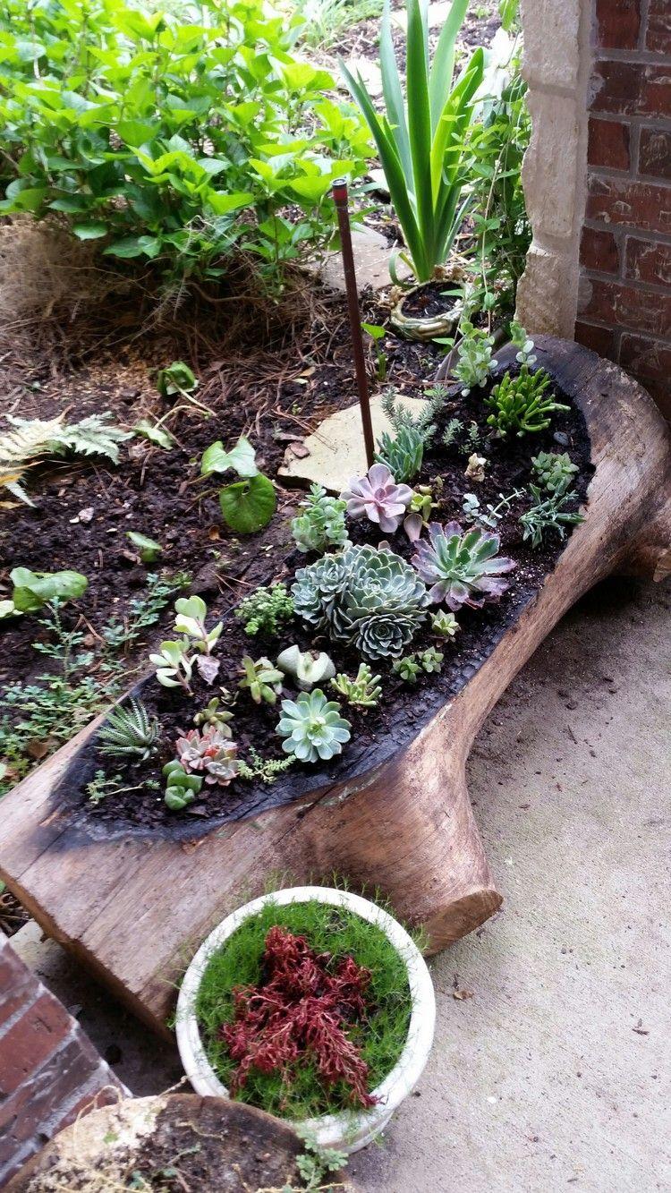 Déco bois flotté & plantes succulentes - la nature s\'invite ...