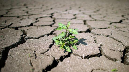 nachhaltige und ethische Anlagen - noch ein zartes Pflänzchen?!