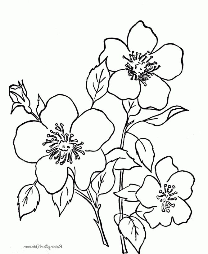 Coolest printable coloring pages of flowers - http://coloring ...