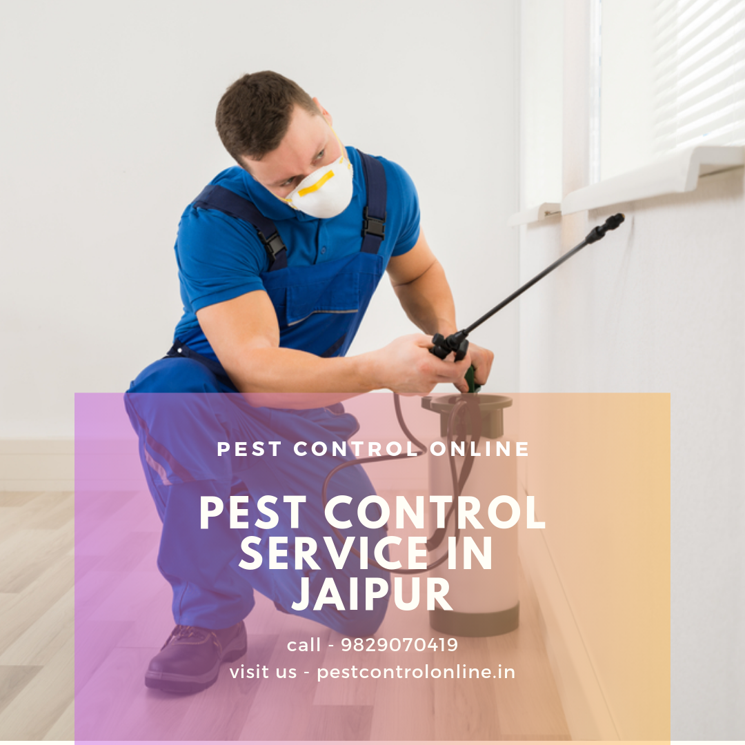 Pest Control Online Offers A Range Of Top Pest Control