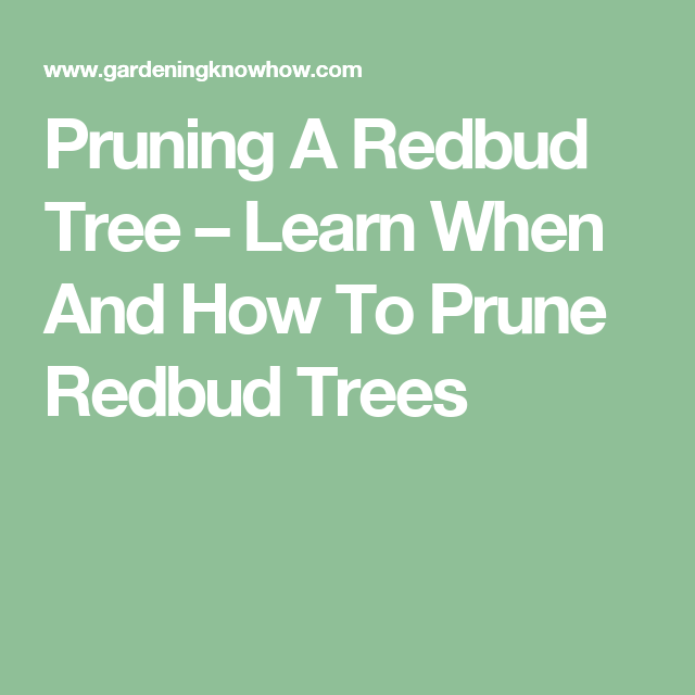 Pruning A Redbud Tree Learn When And How To Prune Trees