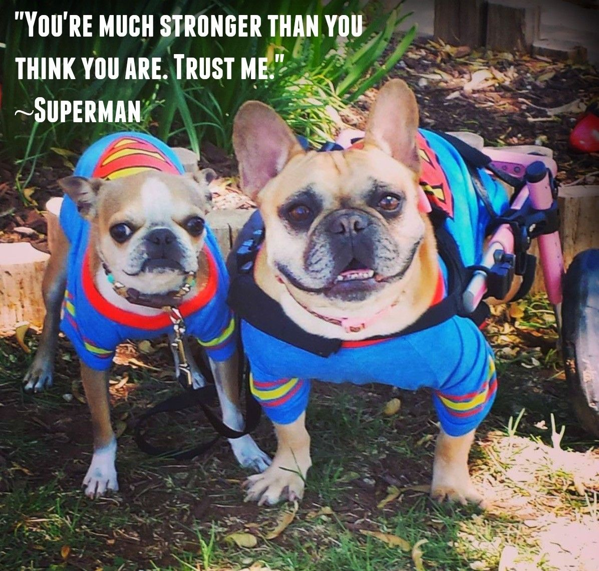 Inspirational Quote Of The Week You Re Much Stronger Than You