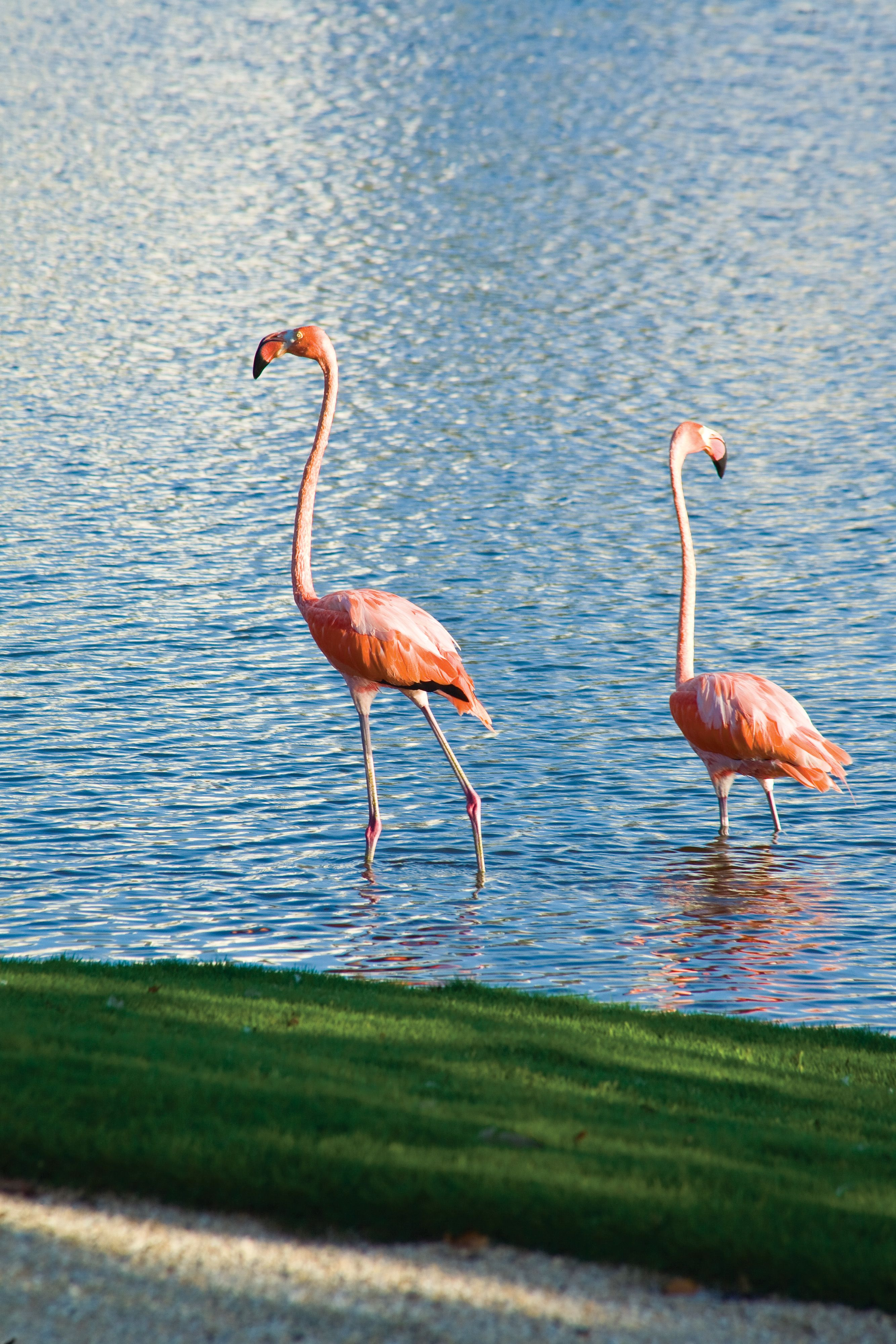 Flamingos At Turnberry Isle Miami Flamingo Pink Flamingos Most Luxurious Hotels