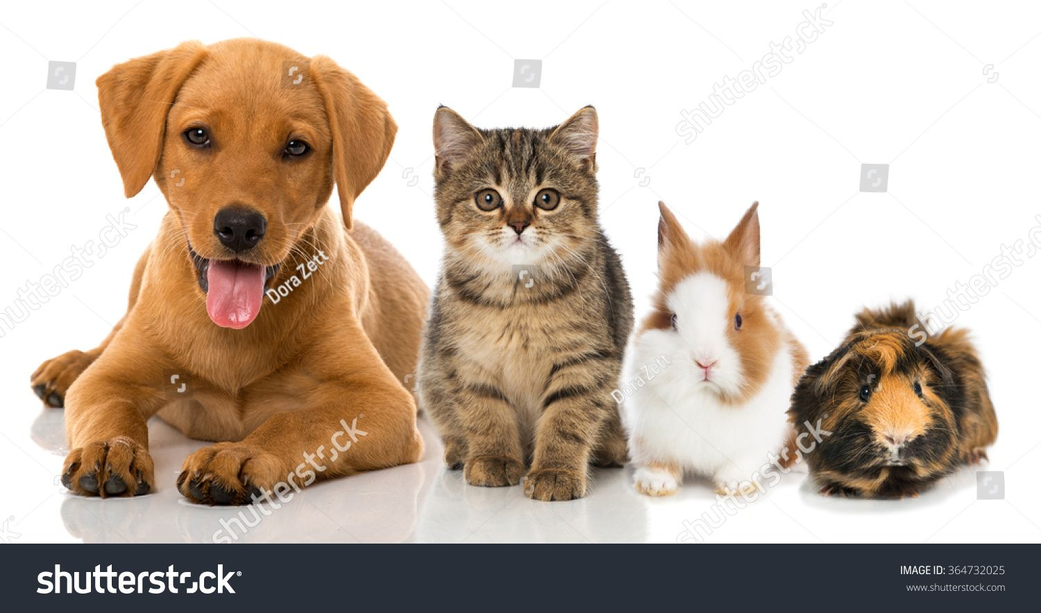 Pin by Malcolm Crowther on Vet Pictures Pets, Pet