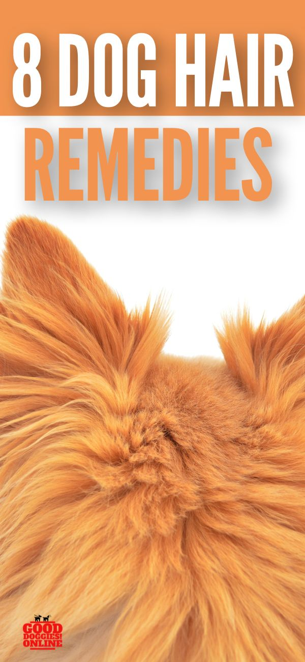 8 Real Dog Shedding Remedies That Will Make Your Life Less