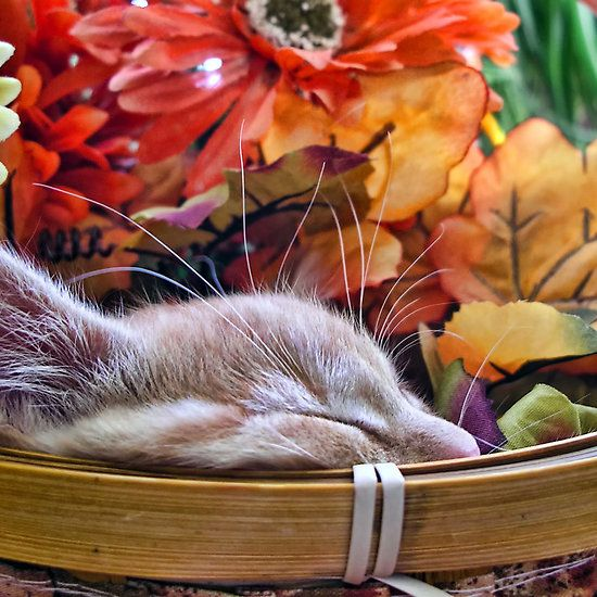 Di Milo Cute Kitty Cat Kitten In Decorative Fall Colors Cats And Kittens Cute Cats Kittens