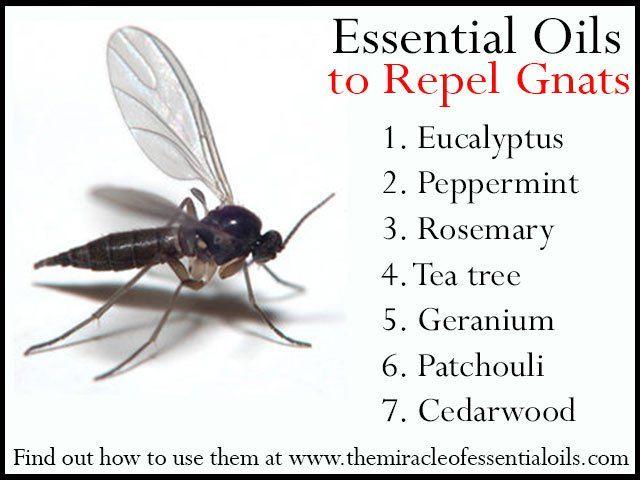7 Repellent Essential Oils For Gnats Essential Oil