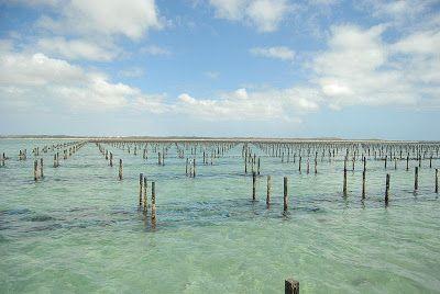 Oyster Farm in Australia