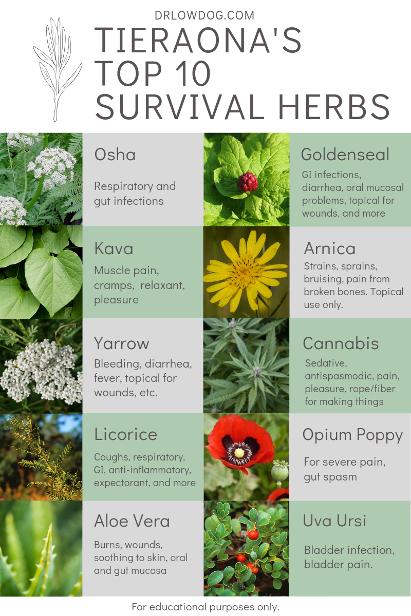 Distinción Rubí otro  I was recently asked in an interview what ten herbs I'd take if I were  stranded on a desert island. Though it's har… | Medical herbs, Healing  herbs, Medicinal herbs