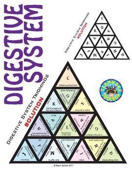 Triominos Puzzle ~DIGESTIVE SYSTEM~ Biology & Anatomy ...