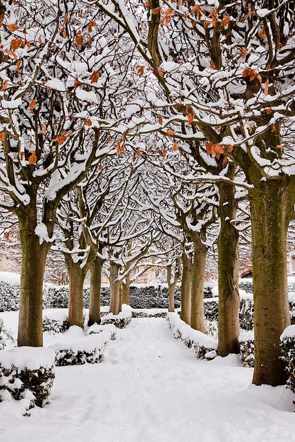 Snowy Avenue,  Botanic Garden, Oxford, England  There is just something about a tree-lined path that excites me. <3