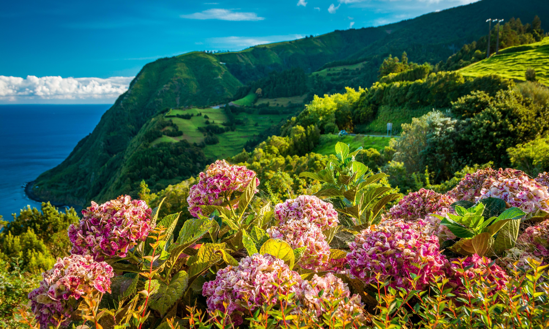 Wild Spring Flowers In Europe Readers Travel Tips Travel