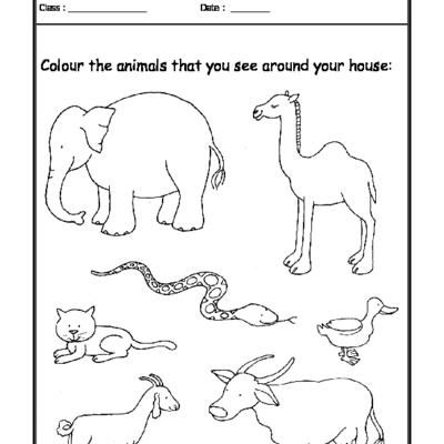 Worksheet Of Worksheet 06 Animals Around Your Home Animals And Their Habitats Animals Science Animal Worksheets Kids Worksheets Printables Animal Science Animals and their habitats worksheets