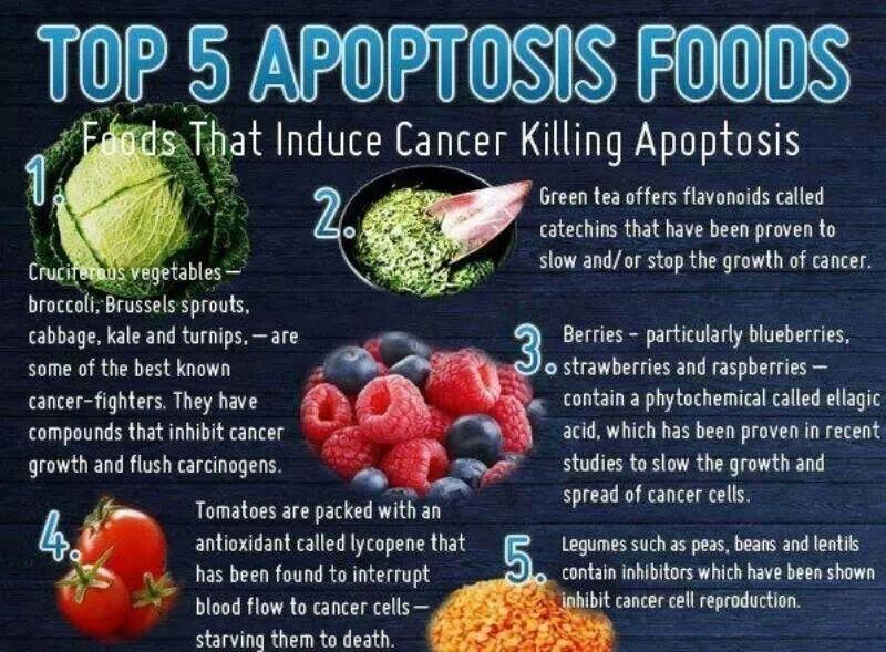 Cancer killing apoptisis foods legumes cruciferous green tea