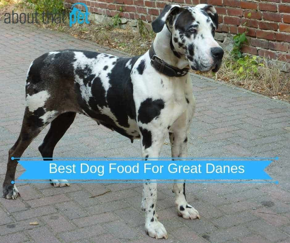 Best dog food for great danes in 2018 puppy and adults