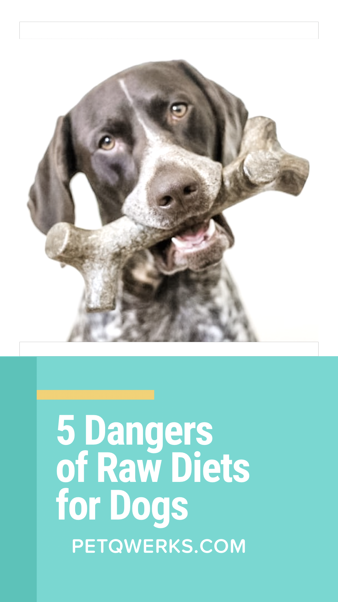 5 Dangers Of Raw Diets For Dogs Pet Qwerks Toys Raw Diet Dog Raw Diet Raw Dog Food Recipes