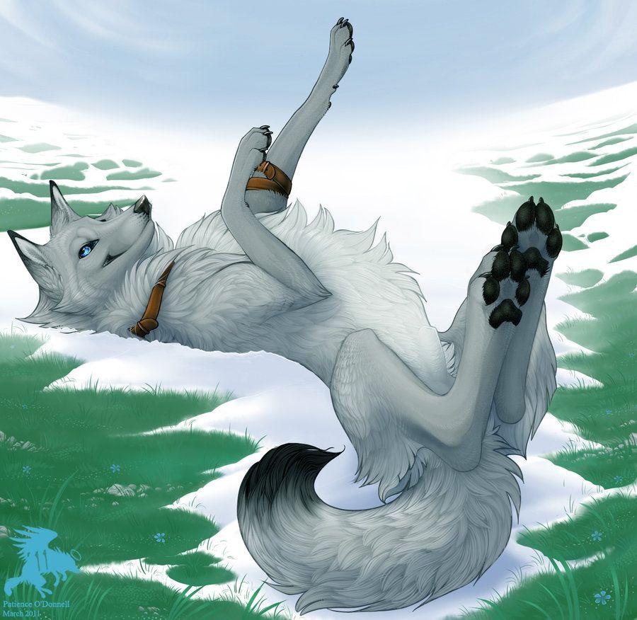 Photo of Lobo the Wolf by Shadowwolf on DeviantArt