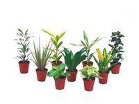 Rosliny Zielone Miniatury Flowers Plants