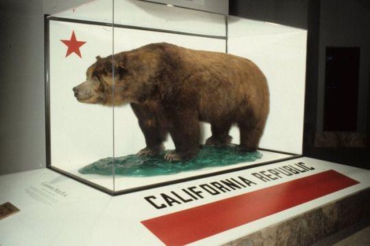 """A sede local da New Era no México homenageia a cultura da Califórnia (que era um estado mexicano até 1848) com 3 snapbacks 9Fifty com símbolos do estado. A """"California Collection"""" traz menções a """"West..."""