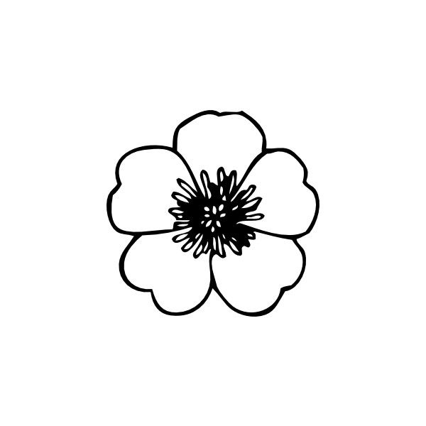 Buttercup Flower clip art liked on Polyvore featuring