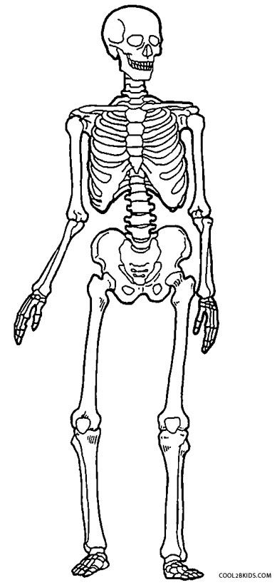 Skeleton Coloring Pages Anatomiya Biologiya