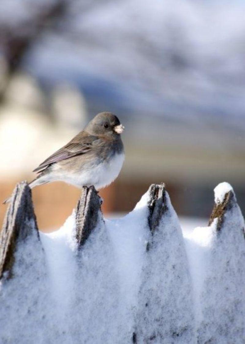 23+ Les oiseaux du jardin en hiver ideas in 2021