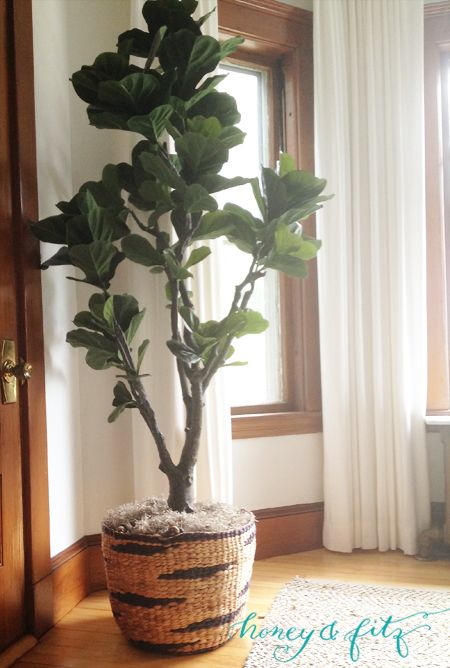 honey and fitz fake fiddle leaf fig tree